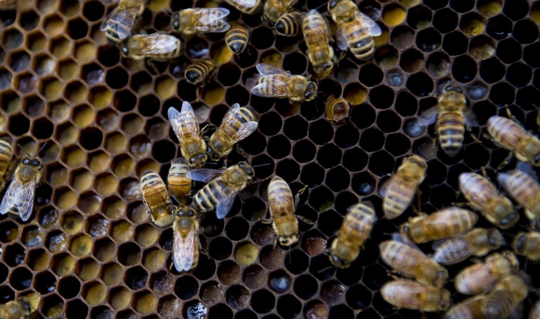 Paul Kitagaki/Sacramento Bee/MCT