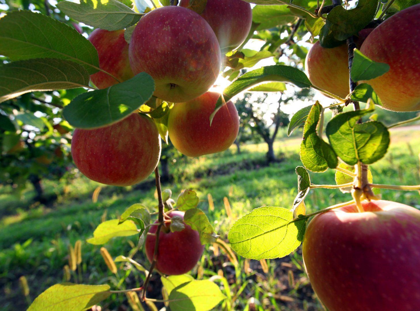 The Comma Interrobang: The Big Apple