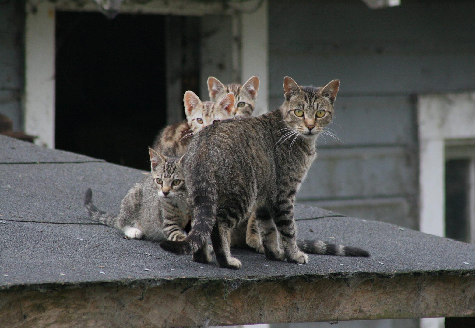 Public Safety Issues Statement on Feral Cats
