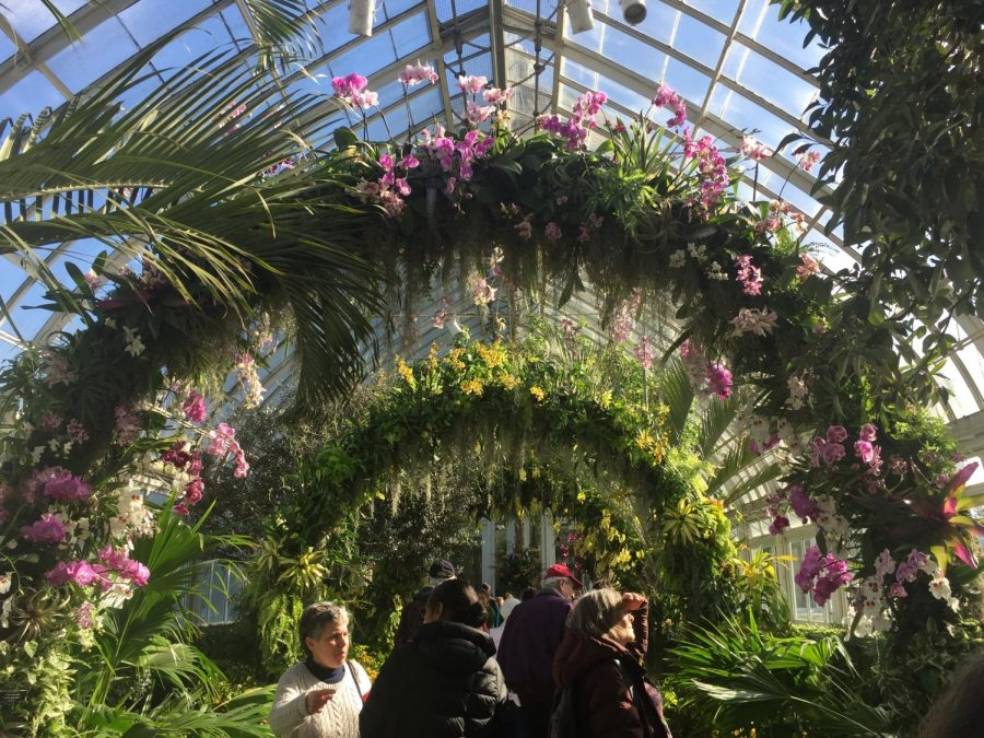 The Orchid Show is hosted in the Enid A. Haupt Conservatory, part of the New York Botanical Garden.