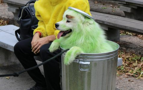Costumed Canines Converge at East River Park