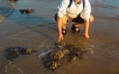 Faculty Spotlight: Professor Mark Botton, Horseshoe Crab Expert