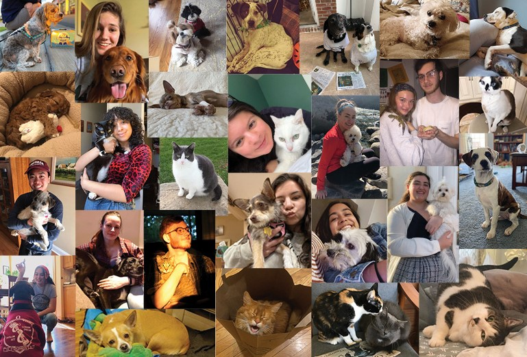 collage of Fordham students and their pets