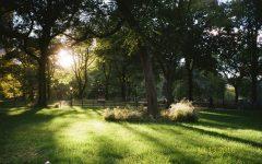 sun shining through the trees in a park