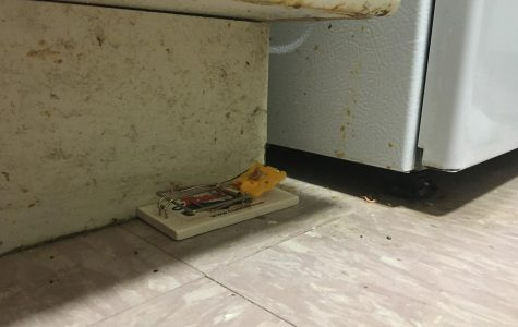 a mouse trap along the bottom of a fridge in McMahon Hall