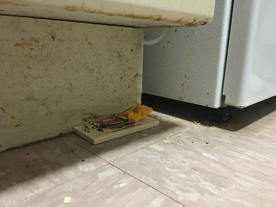 a+mouse+trap+along+the+bottom+of+a+fridge+in+McMahon+Hall