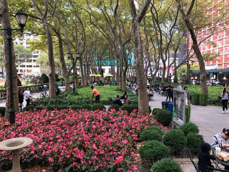 Bright pink flowers in the foreground of Bryant Park, with trees and green space in the background