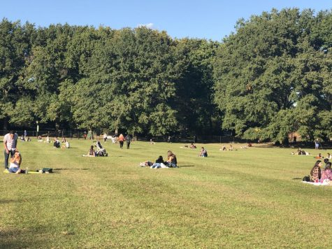 people sitting on green meadow in central park, one of its many open spaces