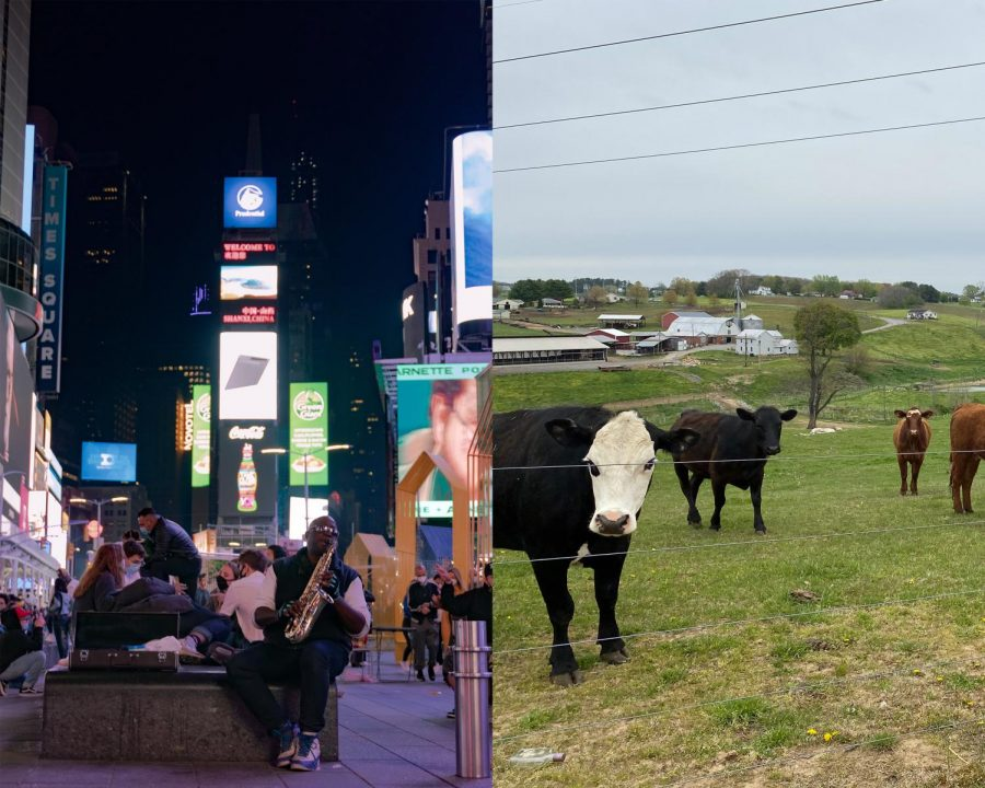 photo of times square at night side by side with cows in a pasture in a small townnight side by side with