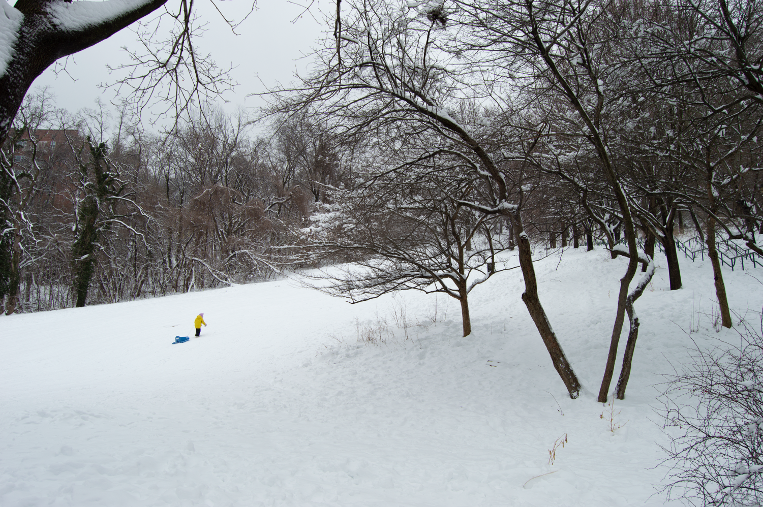 a child drags a sled up a snowy hill in the park