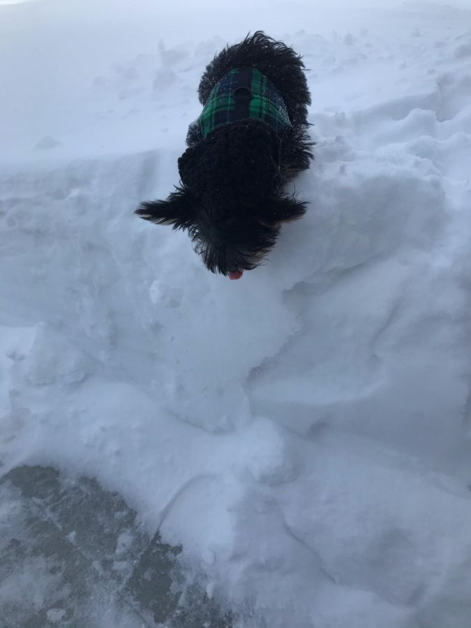 Fred jumps off a snowbank