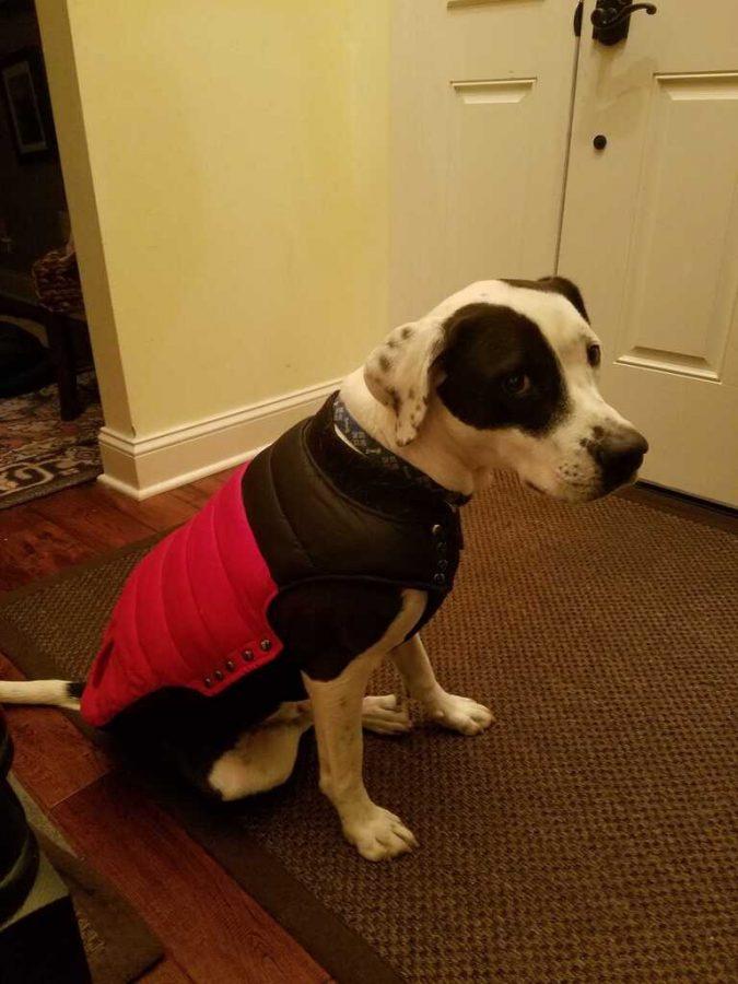 Rocky wears a red sweater