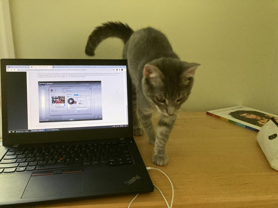 for an article about covid-19 photos, a student's computer and cat are shown