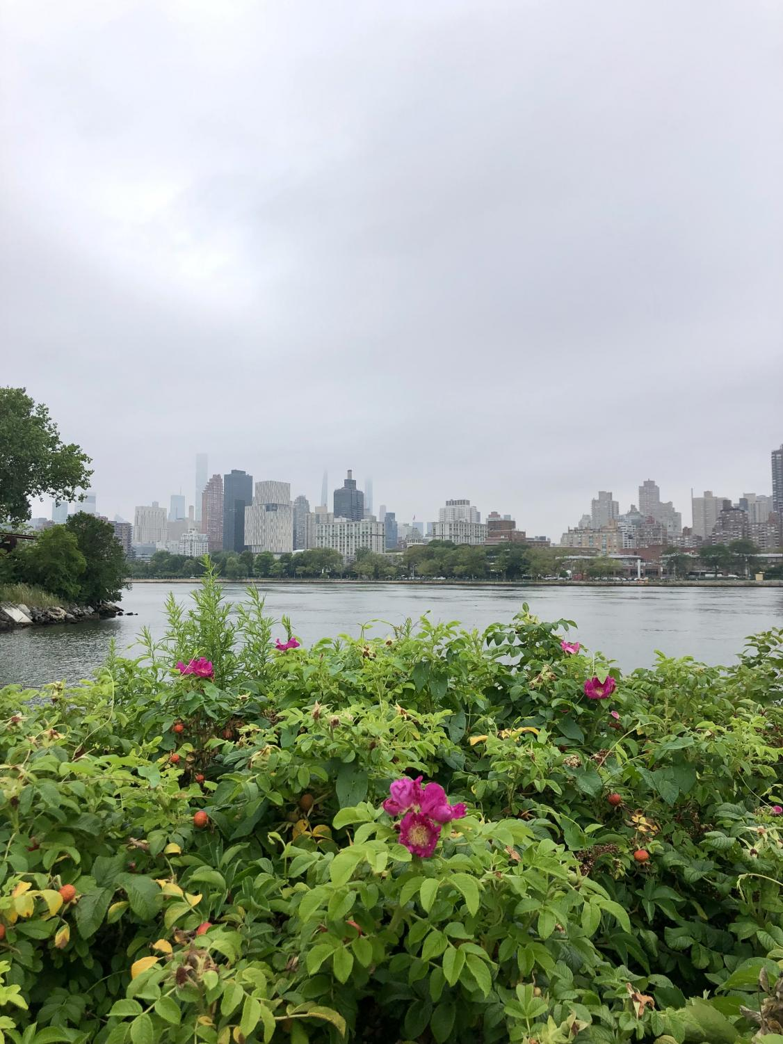 green leaves with pink flowers in front, a view of Roosevelt Island and the Upper East Side in the background